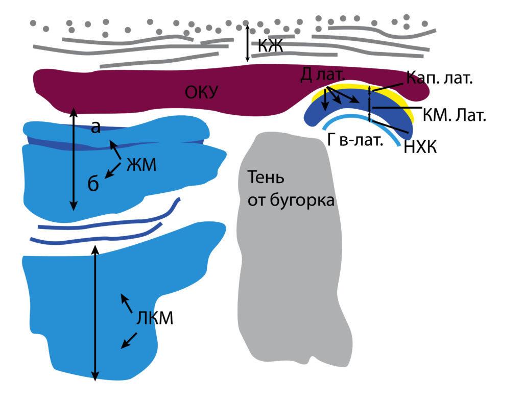 Рис. 4б. КЖ — кожа, подкожно-жировая клетчатка, поверхностная мышечно-апоневротическая система. ОКУ — околоушная слюнная железа. ЖМ — жевательная мышца: а — поверхностная часть, б — глубокая часть. Лат. КМ — латеральная крыловидная мышца: а — верхняя головка, б — нижняя головка. Д лат. — латеральный фрагмент суставного диска. Кап. лат. — латеральный фрагмент капсулы. Г в-лат. — верхнелатеральный фрагмент головки мыщелкового отростка. Тень от бугорка мыщелкового отростка. НХК — надкостнично-хрящевой комплекс.
