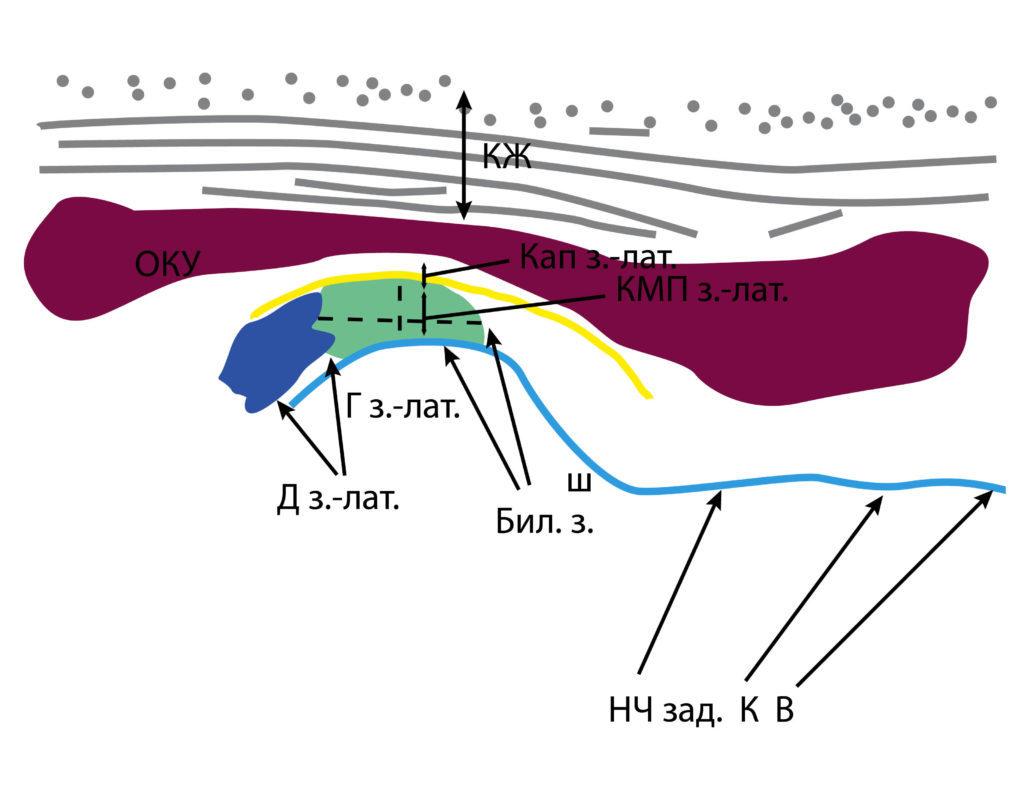 Рис. 5б. КЖ — кожа, подкожно-жировая клетчатка, поверхностная мышечно-апоневротическая система. ОКУ — околоушная слюнная железа. Д з.-лат. — заднелатеральный фрагмент суставного диска. Кап. з.-лат. — заднелатеральный фрагмент капсулы. КМП з.-лат. — заднелатеральное капсульно-мыщелковое пространство. Г з.-лат. — заднелатеральный фрагмент головки мыщелкового отростка. Бил. з. — биламинарная зона. НЧ зад. К В — задний край ветви нижней челюсти.