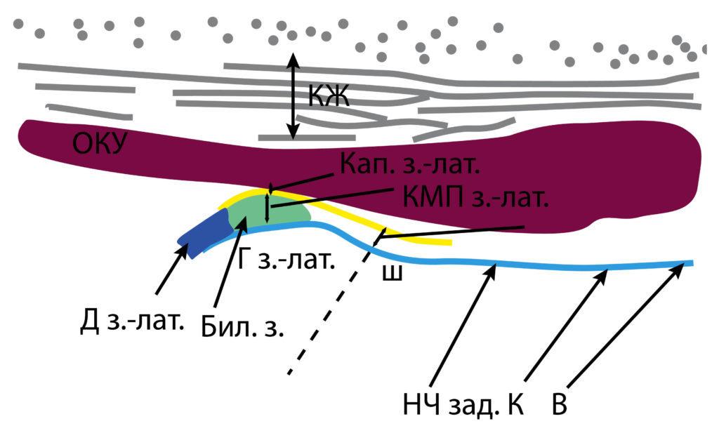 Рис. 6б. КЖ — кожа, подкожно-жировая клетчатка, поверхностная мышечно-апоневротическая система. ОКУ — околоушная слюнная железа. Д з.-лат. — заднелатеральный фрагмент суставного диска. Кап. з.-лат. — заднелатеральный фрагмент капсулы. КМП з.-лат. — заднелатеральное капсульно-мыщелковое пространство. Г з.-лат. — заднелатеральный фрагмент головки мыщелкового отростка. Бил. з. — биламинарная зона. НЧ зад. К В — задний край ветви нижней челюсти.
